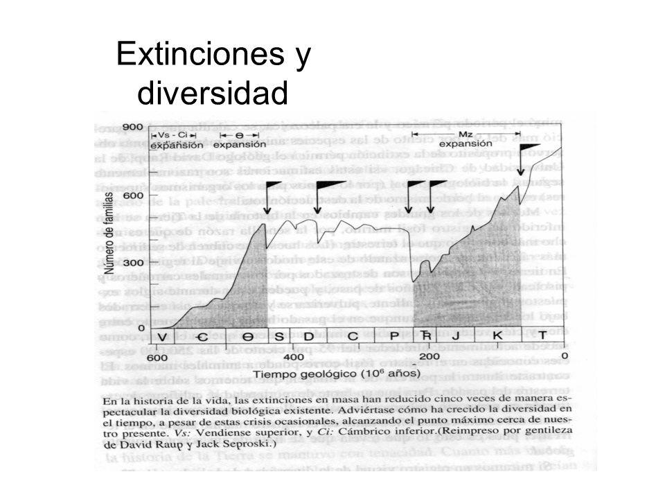 Extinciones y diversidad