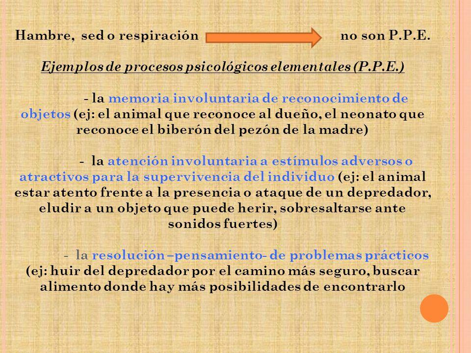 Hambre, sed o respiración no son P.P.E. Ejemplos de procesos psicológicos elementales (P.P.E.) - la memoria involuntaria de reconocimiento de objetos