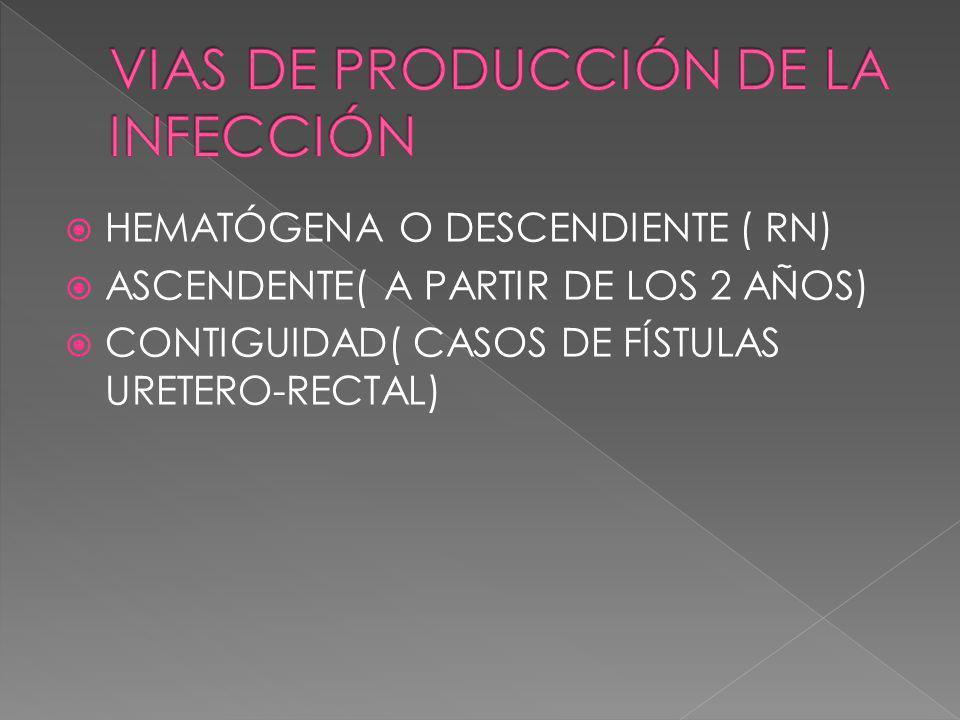HEMATÓGENA O DESCENDIENTE ( RN) ASCENDENTE( A PARTIR DE LOS 2 AÑOS) CONTIGUIDAD( CASOS DE FÍSTULAS URETERO-RECTAL)