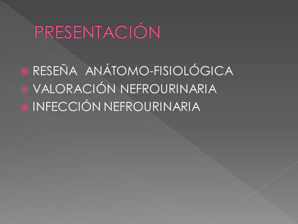RESEÑA ANÁTOMO-FISIOLÓGICA VALORACIÓN NEFROURINARIA INFECCIÓN NEFROURINARIA