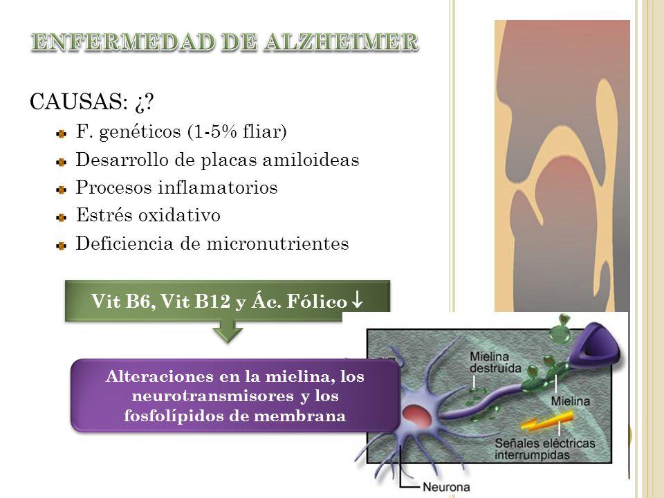 CAUSAS: ¿? F. genéticos (1-5% fliar) Desarrollo de placas amiloideas Procesos inflamatorios Estrés oxidativo Deficiencia de micronutrientes Vit B6, Vi
