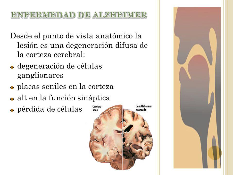 Desde el punto de vista anatómico la lesión es una degeneración difusa de la corteza cerebral: degeneración de células ganglionares placas seniles en