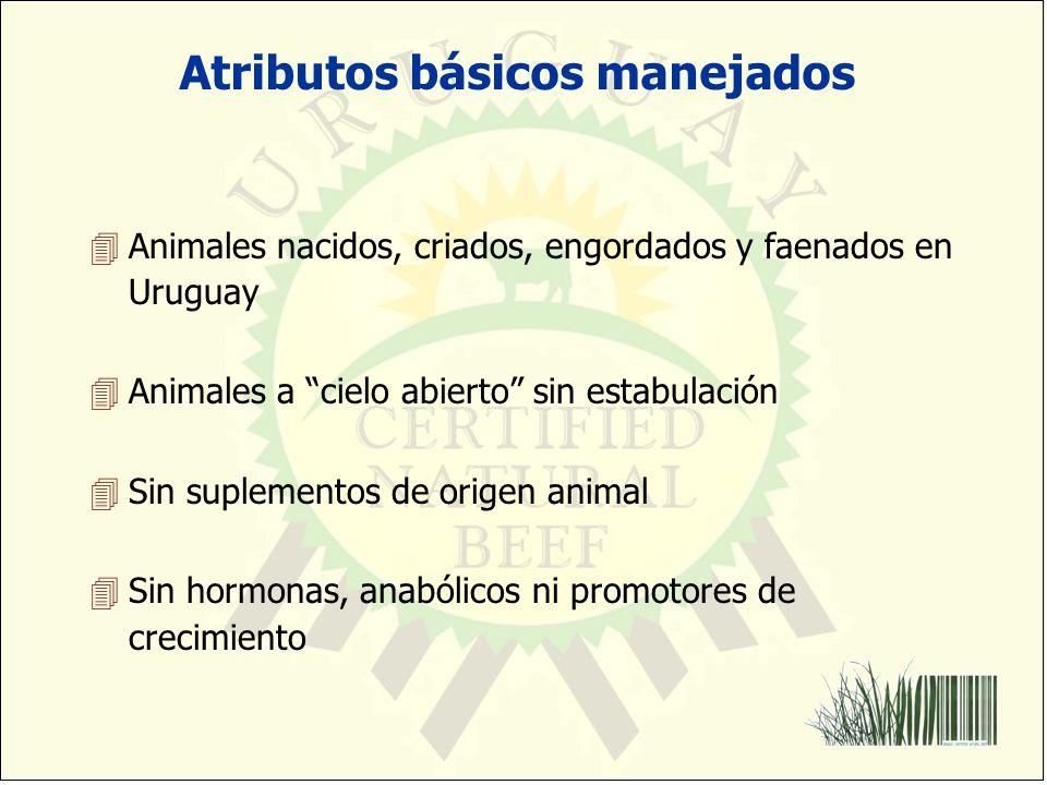 Atributos básicos manejados 4Animales nacidos, criados, engordados y faenados en Uruguay 4Animales a cielo abierto sin estabulación 4Sin suplementos d
