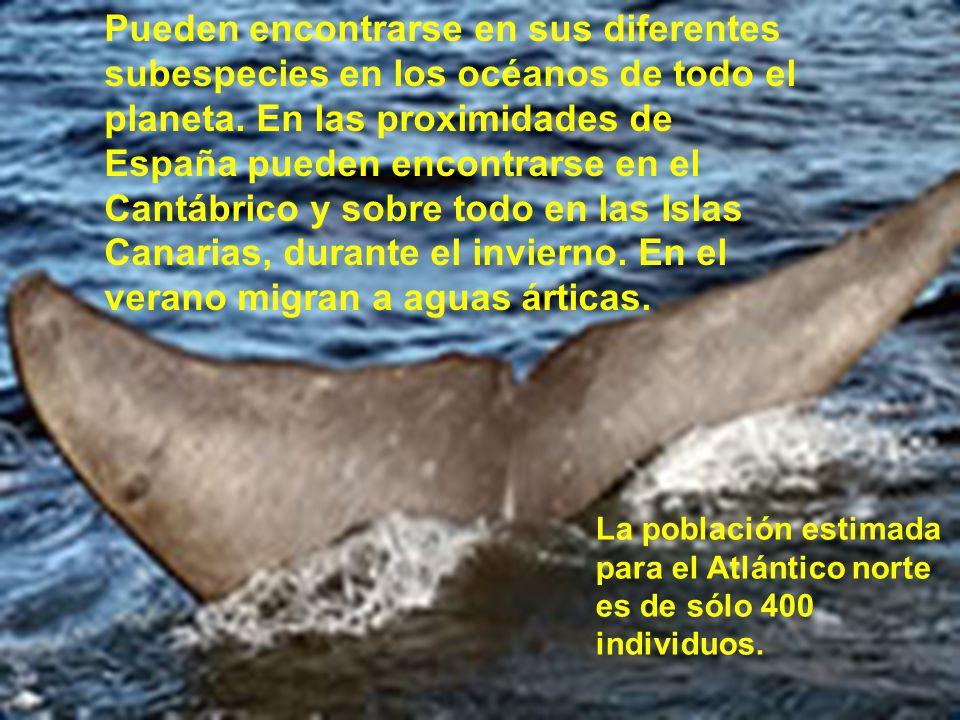 Las ballenas azules son maduras sexualmente a los 5 años.