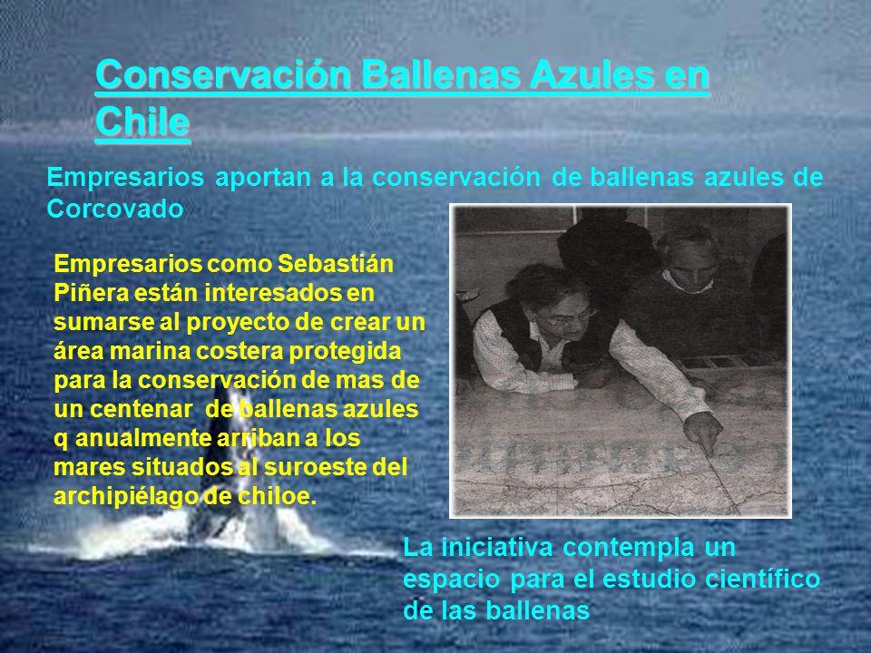 Conservación Ballenas Azules en Chile Empresarios aportan a la conservación de ballenas azules de Corcovado La iniciativa contempla un espacio para el