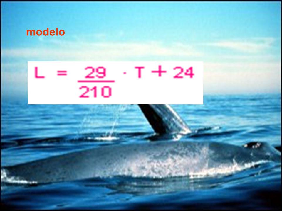 ¿Cuál es el aumento diario en la longitud de una ballena joven.