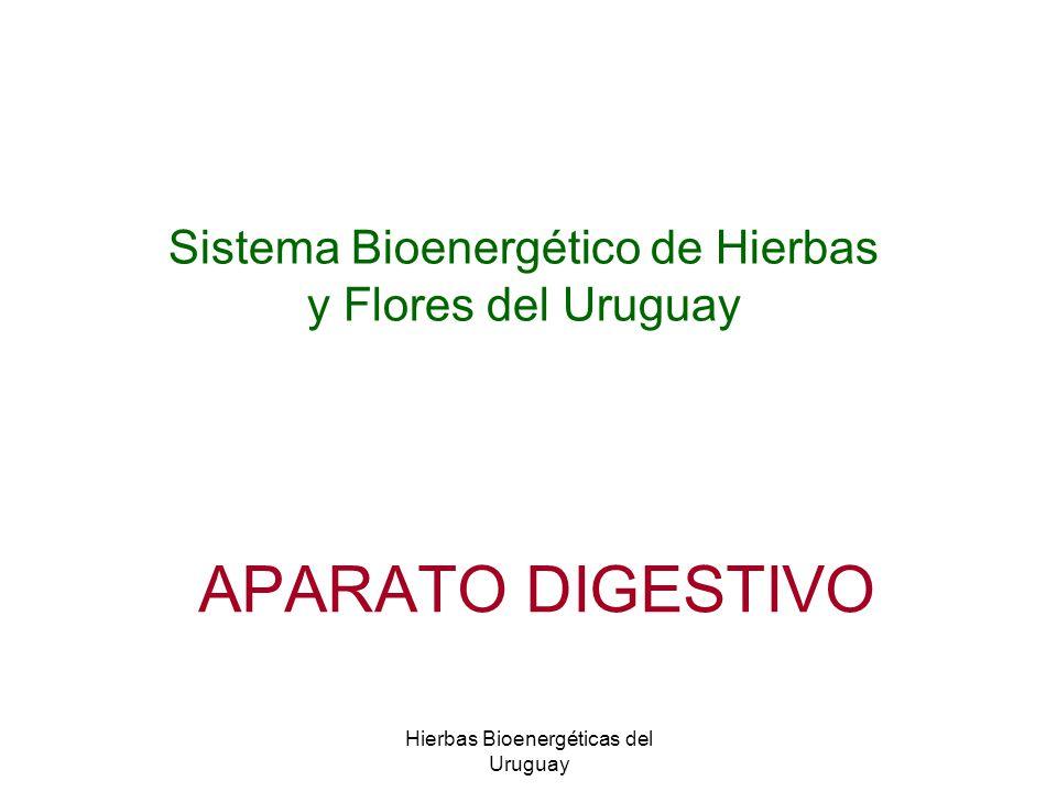 Hierbas Bioenergéticas del Uruguay APARATO DIGESTIVO Sistema Bioenergético de Hierbas y Flores del Uruguay