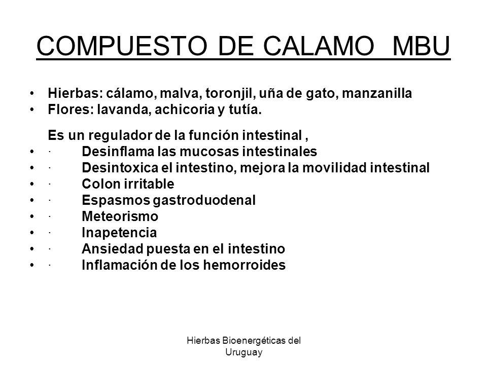 Hierbas Bioenergéticas del Uruguay COMPUESTO DE CALAMO MBU Hierbas: cálamo, malva, toronjil, uña de gato, manzanilla Flores: lavanda, achicoria y tutí