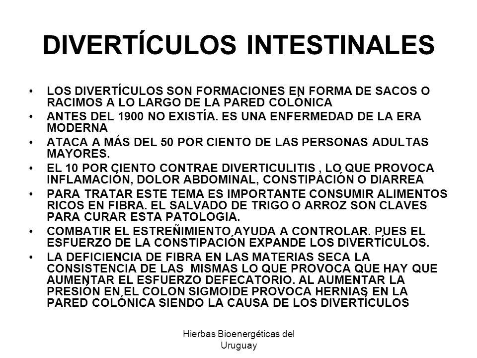 Hierbas Bioenergéticas del Uruguay DIVERTÍCULOS INTESTINALES LOS DIVERTÍCULOS SON FORMACIONES EN FORMA DE SACOS O RACIMOS A LO LARGO DE LA PARED COLÓN