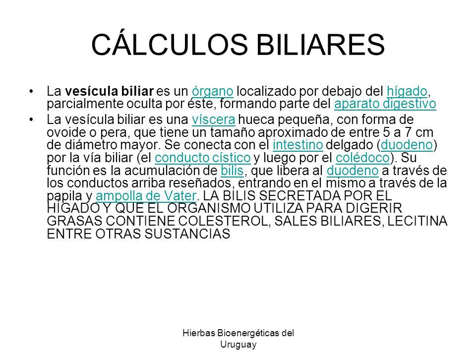 Hierbas Bioenergéticas del Uruguay CÁLCULOS BILIARES La vesícula biliar es un órgano localizado por debajo del hígado, parcialmente oculta por éste, f