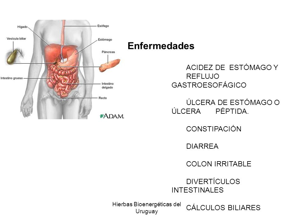 Hierbas Bioenergéticas del Uruguay Enfermedades ACIDEZ DE ESTÓMAGO Y REFLUJO GASTROESOFÁGICO ÚLCERA DE ESTÓMAGO O ÚLCERA PÉPTIDA. CONSTIPACIÓN DIARREA