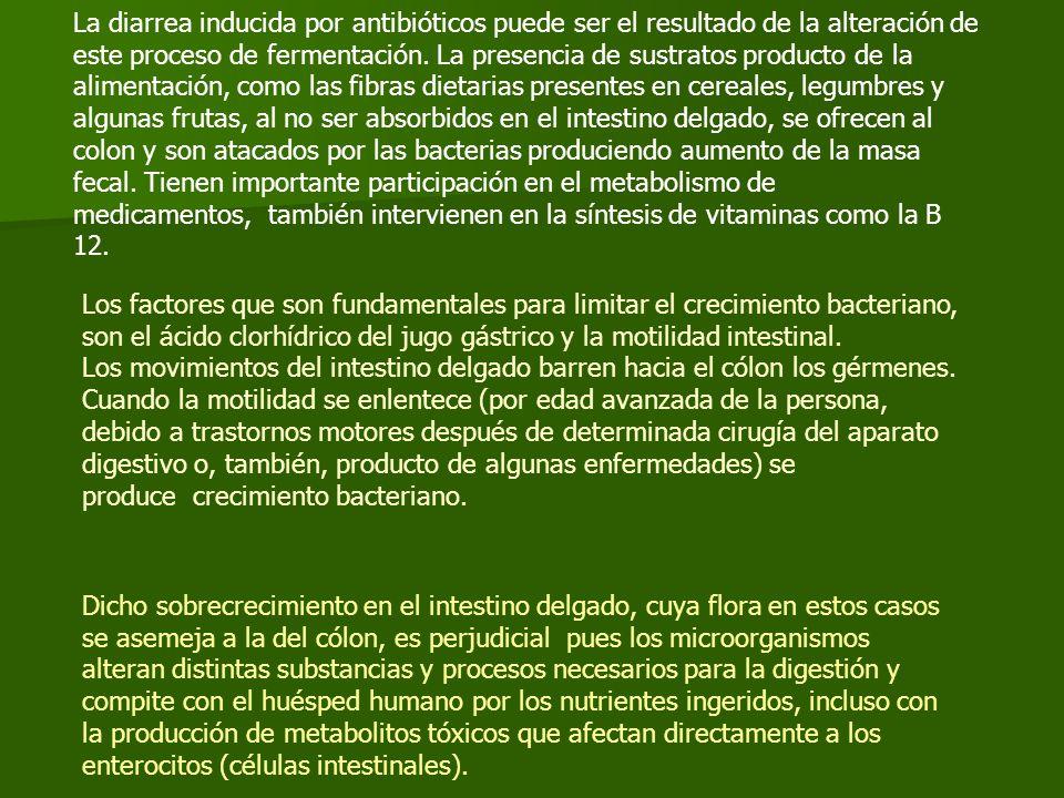 La diarrea inducida por antibióticos puede ser el resultado de la alteración de este proceso de fermentación. La presencia de sustratos producto de la