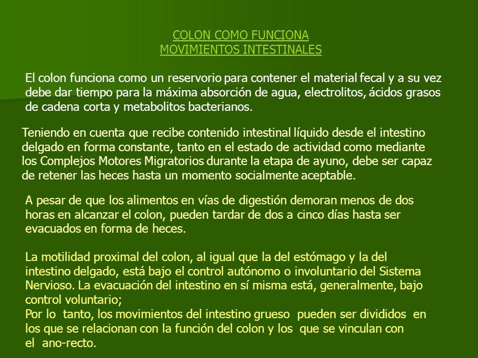 COLON COMO FUNCIONA MOVIMIENTOS INTESTINALES El colon funciona como un reservorio para contener el material fecal y a su vez debe dar tiempo para la máxima absorción de agua, electrolitos, ácidos grasos de cadena corta y metabolitos bacterianos.