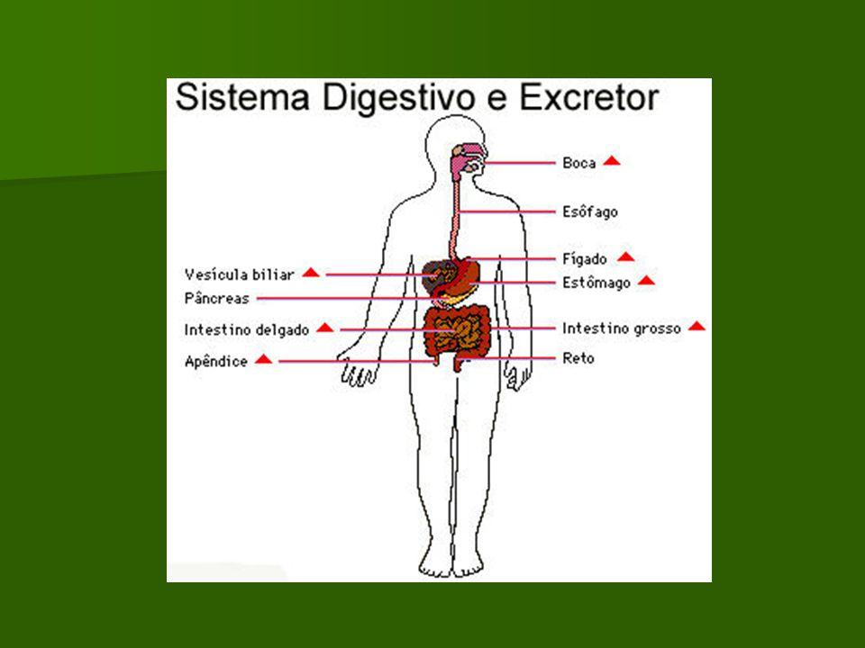 Colocyntis Causas del dolor Agitación, inquietud, se acompaña de insomnio con vomitos, por el dolor, escalofrios en el cuerpo,