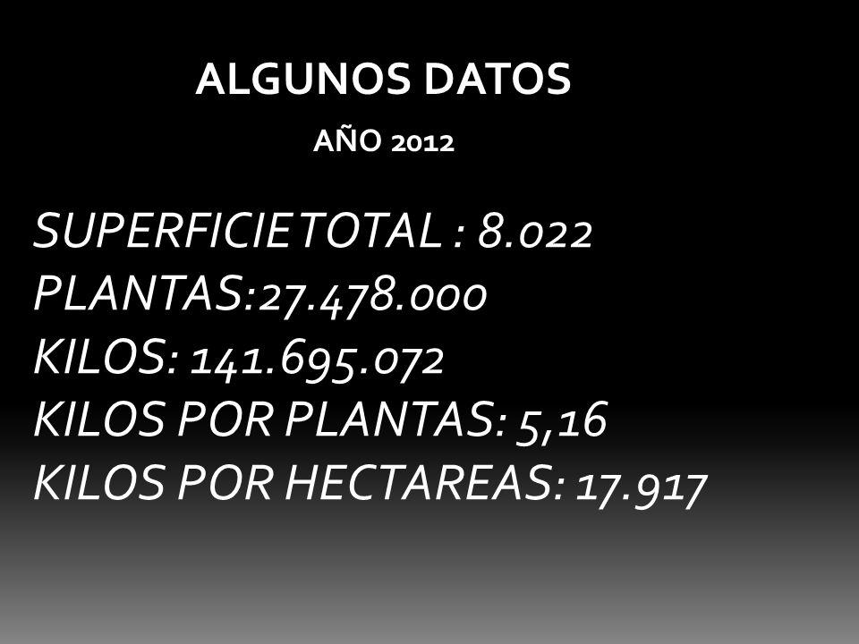 ALGUNOS DATOS AÑO 2012 SUPERFICIE TOTAL : 8.022 PLANTAS:27.478.000 KILOS: 141.695.072 KILOS POR PLANTAS: 5,16 KILOS POR HECTAREAS: 17.917