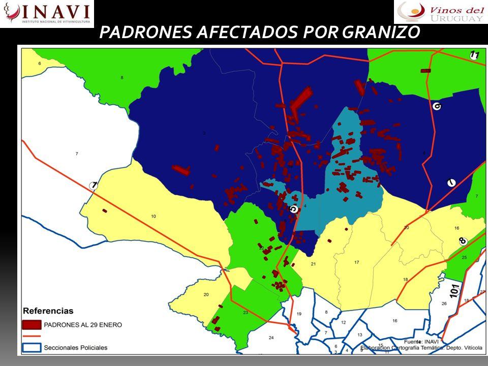 GEOREFERENCIACION PADRONES AFECTADOS POR GRANIZO