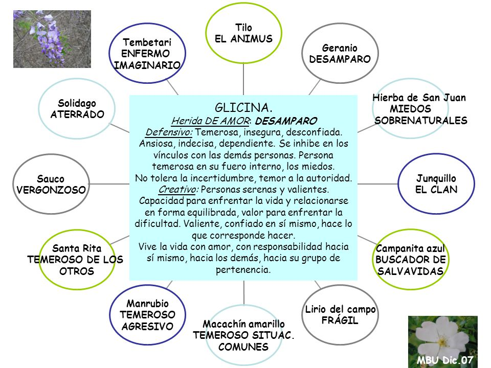 Ciruelo ALTERNANTE Jazmín celeste CAMINADOR INDEFINIDO Jazmín de hungría ACELERADO Lavanda DESCONTROLADO Rosa Naranja AMANTE Milenrama OVÁRICA Tibuchina TORPE Crisantemo HIPERESTIMULADO Tarumán AGOTADO EMOCIONAL Verónica ANTICIPADO MAL Aromo PARALIZADO Retama CONTACTO CON LA SOMBRA ARRAYÁN Herida DE AMOR: SUFRIMIENTO-DOLOR Temor al sufrimiento.