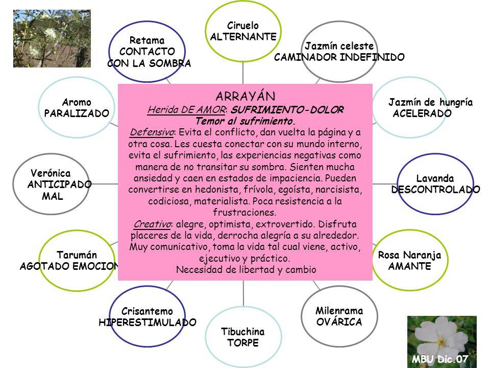 CORONILLA Herida DE AMOR: HUMILLACIÓN- DESVALORIZACIÓN Defensivo: Recios, machos.