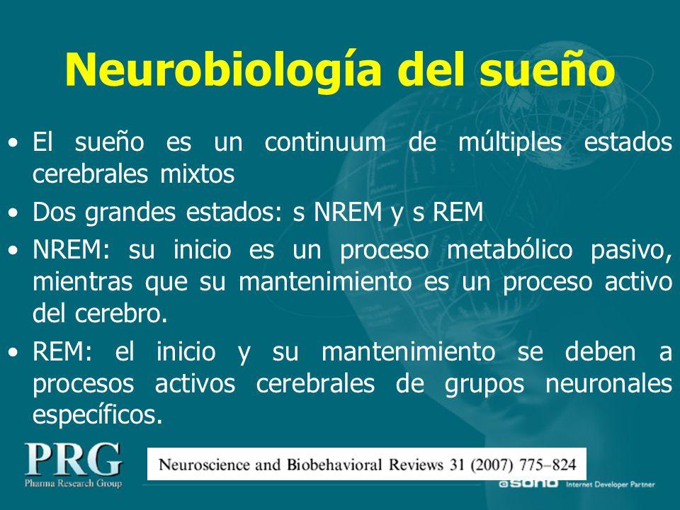 Neurobiología del sueño El sueño es un continuum de múltiples estados cerebrales mixtos Dos grandes estados: s NREM y s REM NREM: su inicio es un proceso metabólico pasivo, mientras que su mantenimiento es un proceso activo del cerebro.