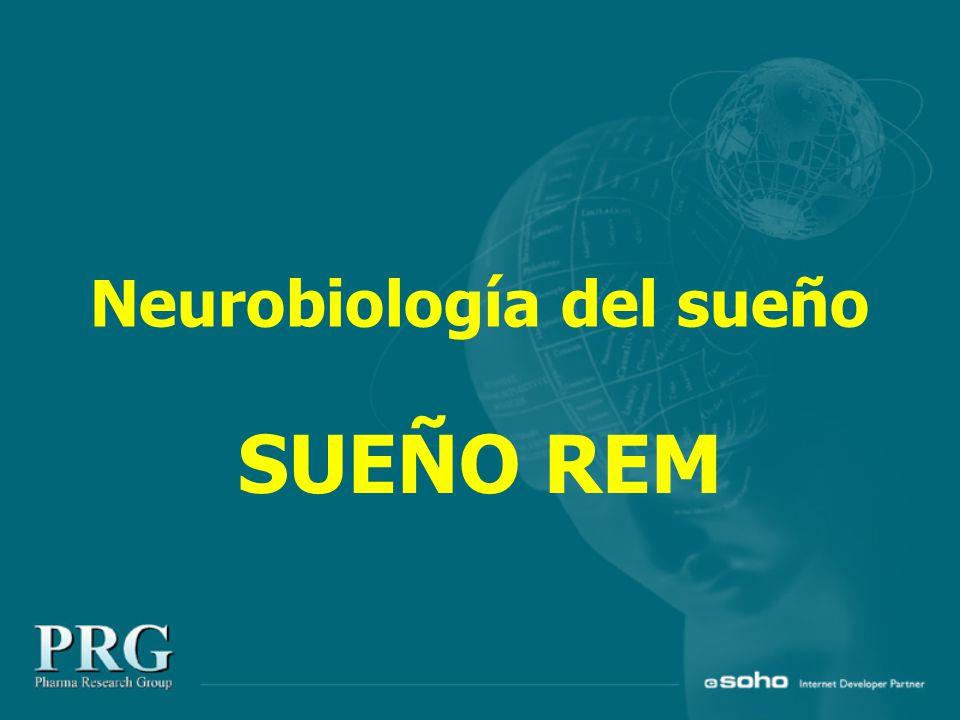 Neurobiología del sueño SUEÑO REM