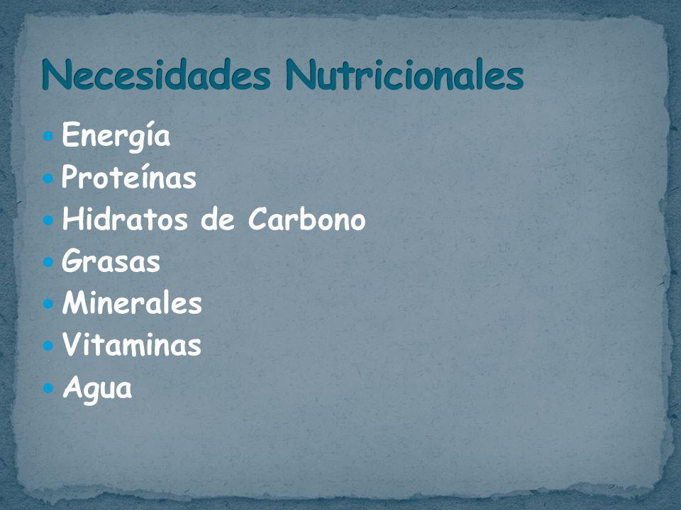 Energía Proteínas Hidratos de Carbono Grasas Minerales Vitaminas Agua