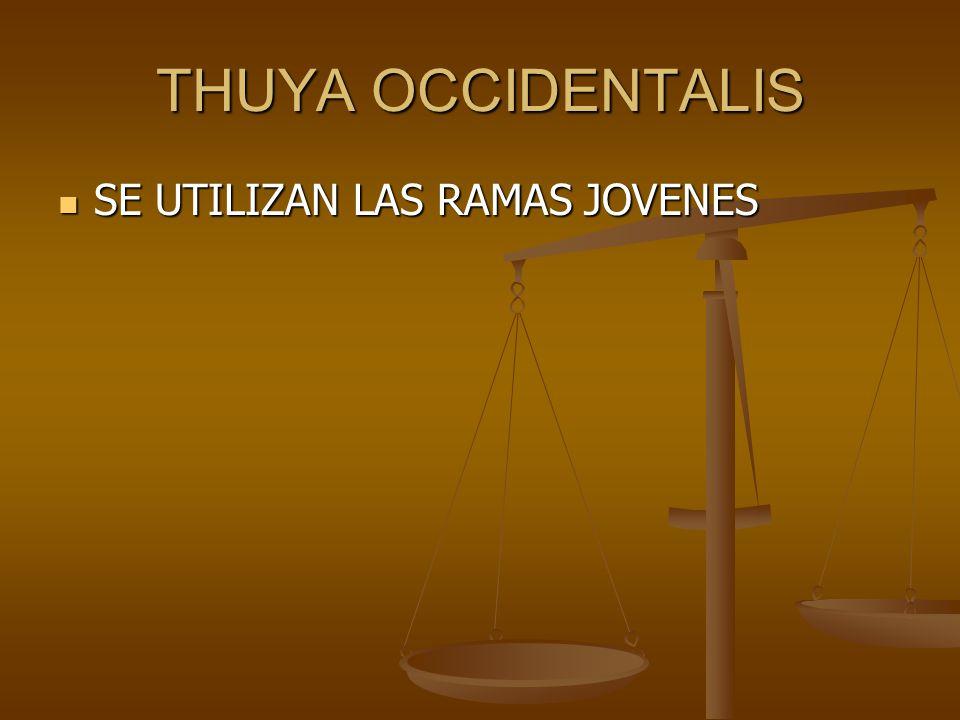 THUYA OCCIDENTALIS SE UTILIZAN LAS RAMAS JOVENES SE UTILIZAN LAS RAMAS JOVENES