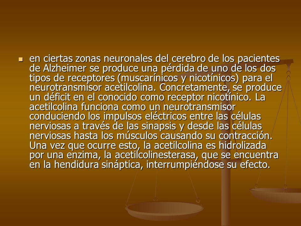 en ciertas zonas neuronales del cerebro de los pacientes de Alzheimer se produce una pérdida de uno de los dos tipos de receptores (muscarínicos y nic