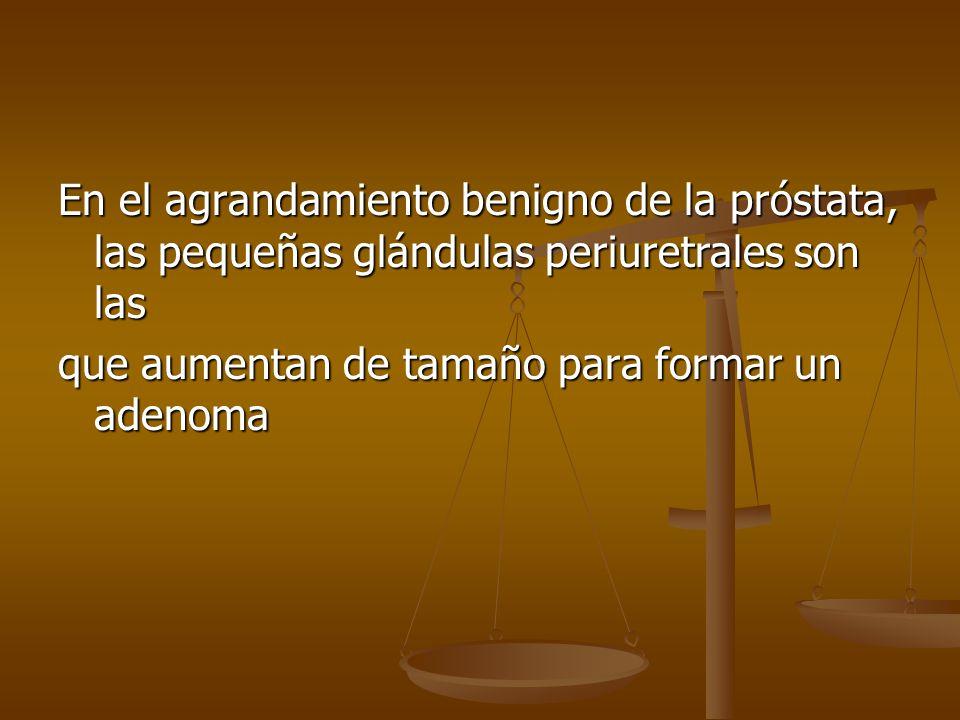 En el agrandamiento benigno de la próstata, las pequeñas glándulas periuretrales son las que aumentan de tamaño para formar un adenoma