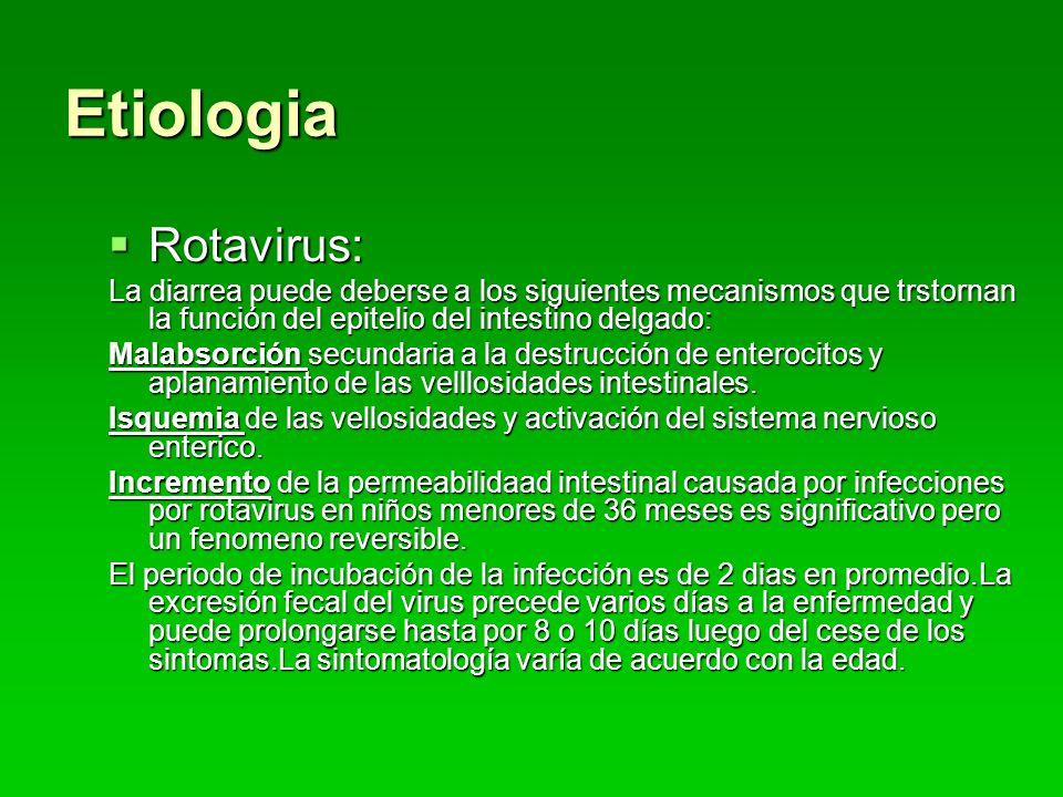Etiologia Rotavirus: Rotavirus: La diarrea puede deberse a los siguientes mecanismos que trstornan la función del epitelio del intestino delgado: Malabsorción secundaria a la destrucción de enterocitos y aplanamiento de las velllosidades intestinales.