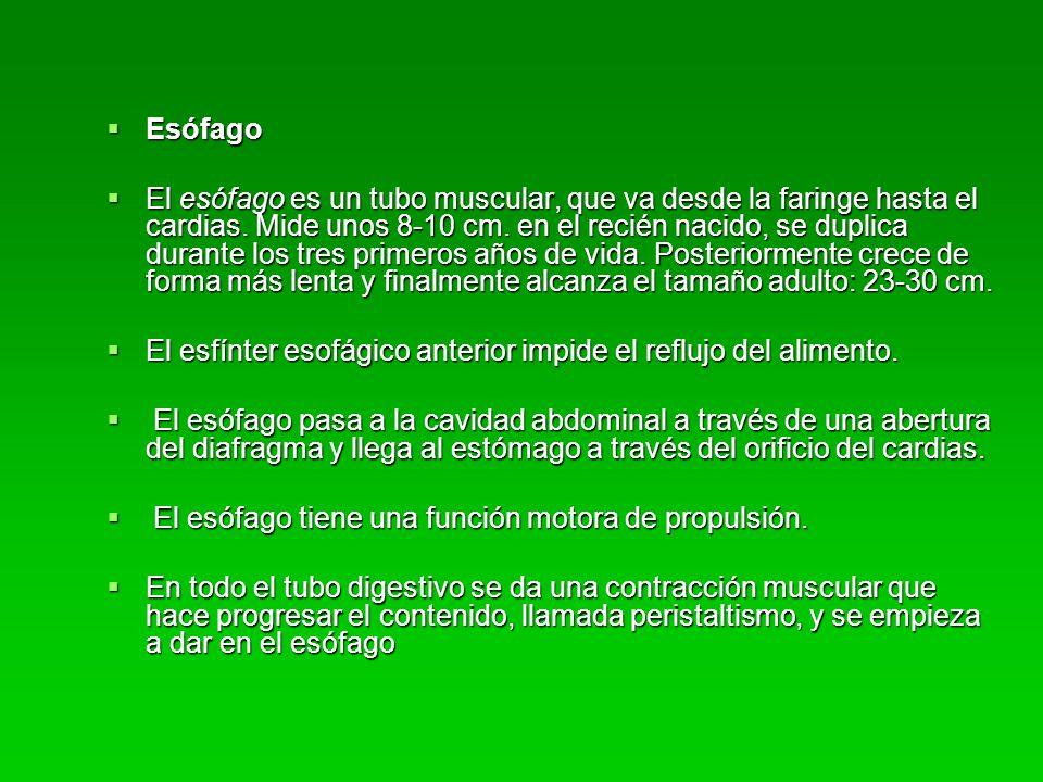 ETIOLOGIA Virales: Virales: -rotavirus -rotavirus