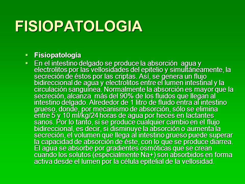FISIOPATOLOGIA Fisiopatología Fisiopatología En el intestino delgado se produce la absorción agua y electrolitos por las vellosidades del epitelio y simultáneamente, la secreción de éstos por las criptas.