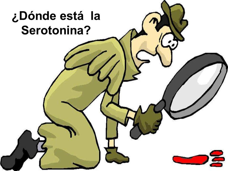 ¿Dónde está la Serotonina?