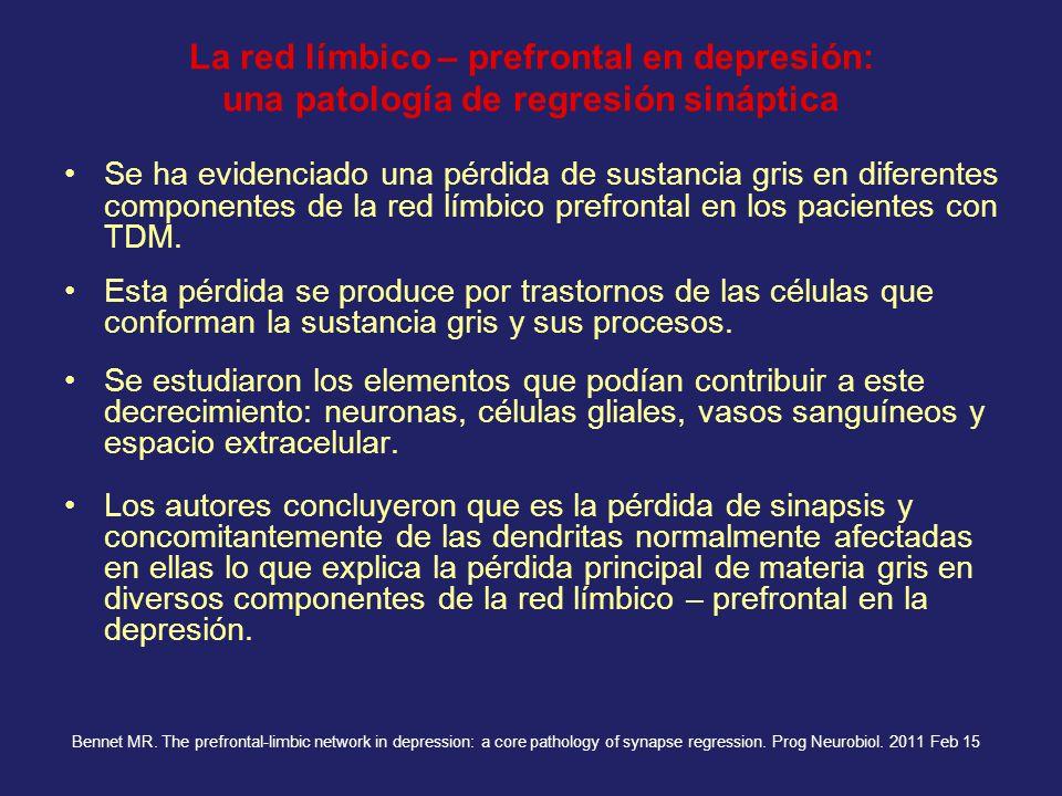 La red límbico – prefrontal en depresión: una patología de regresión sináptica Se ha evidenciado una pérdida de sustancia gris en diferentes component