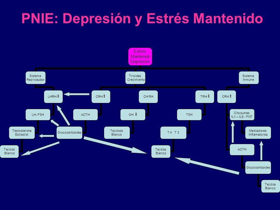 PNIE: Depresión y Estrés Mantenido Estrés Mantenido Depresión Sistema Reproductor LHRH LH- FSH Testosterona Estradiol Tejidos Blanco Tiroides Crecimie
