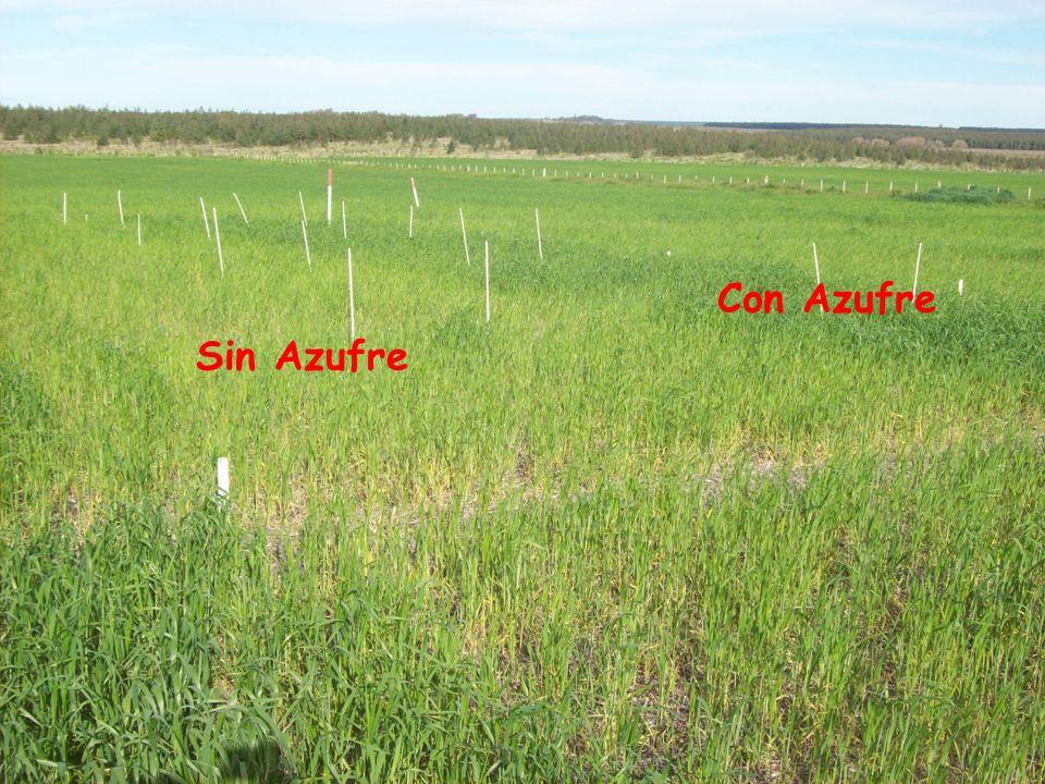 Rendimiento y sus componentes, biomasa a floración, biomasa a cosecha e Índice de Cosecha.