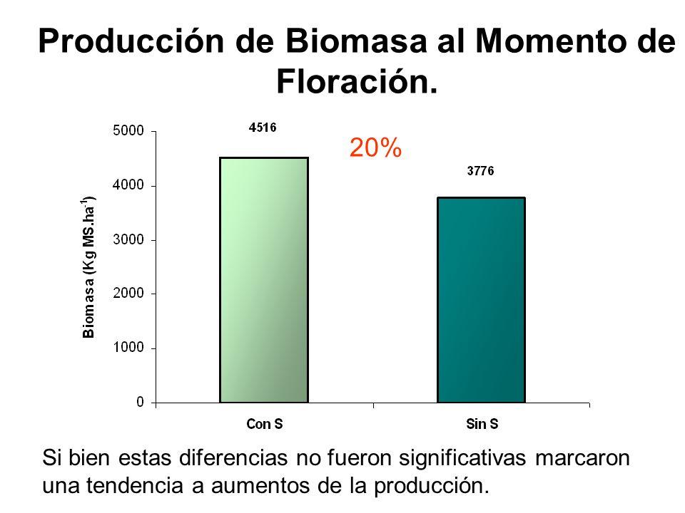 Producción de Biomasa al Momento de Floración. 20% Si bien estas diferencias no fueron significativas marcaron una tendencia a aumentos de la producci