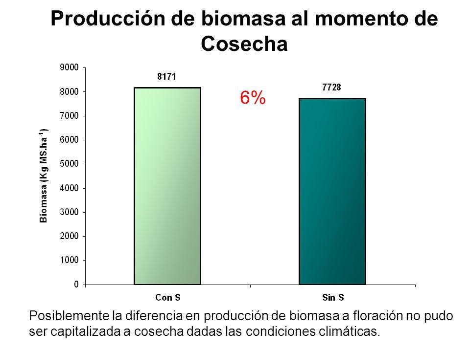Producción de biomasa al momento de Cosecha 6% Posiblemente la diferencia en producción de biomasa a floración no pudo ser capitalizada a cosecha dada