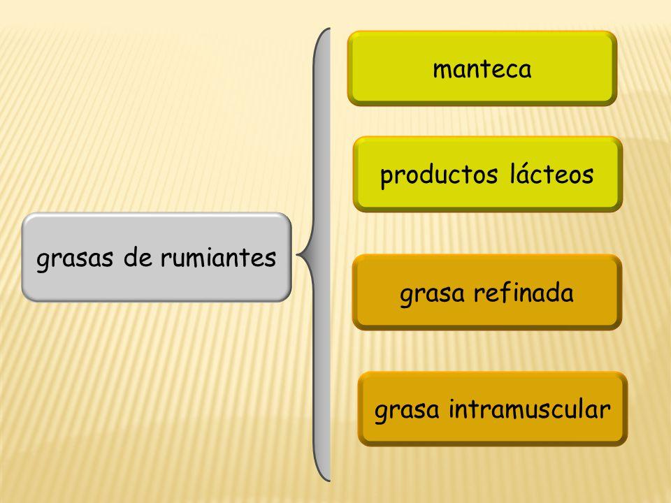 grasas de rumiantes manteca productos lácteos grasa refinada grasa intramuscular