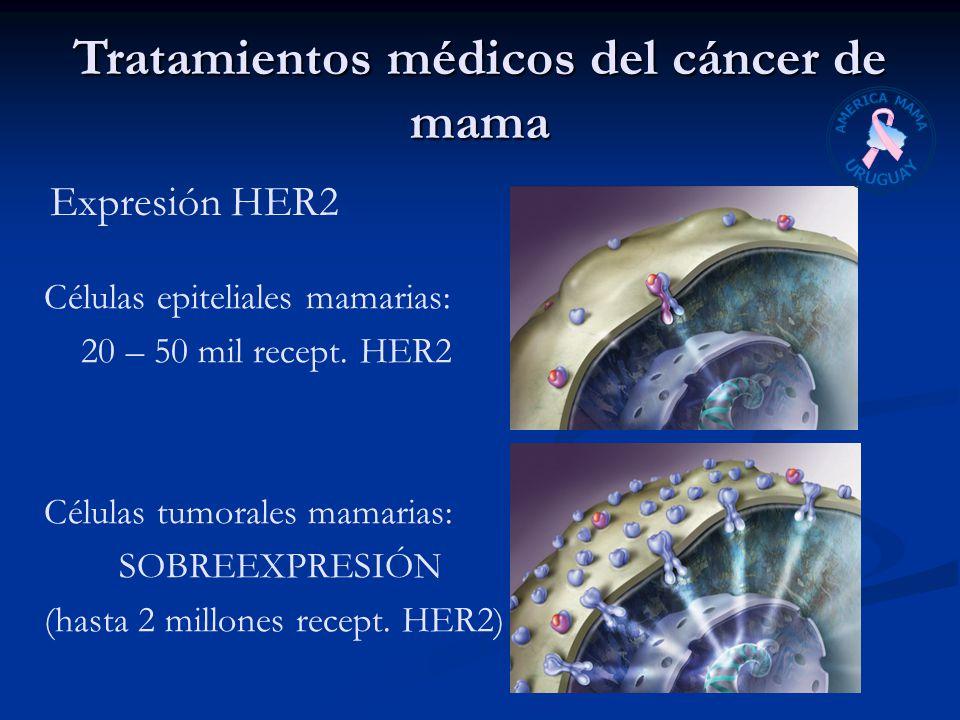 Expresión HER2 Células epiteliales mamarias: 20 – 50 mil recept. HER2 Células tumorales mamarias: SOBREEXPRESIÓN (hasta 2 millones recept. HER2) Trata