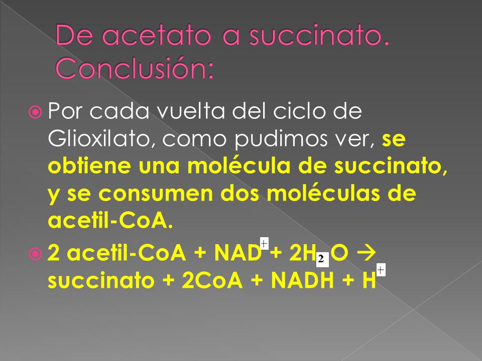 Por cada vuelta del ciclo de Glioxilato, como pudimos ver, se obtiene una molécula de succinato, y se consumen dos moléculas de acetil-CoA. 2 acetil-C