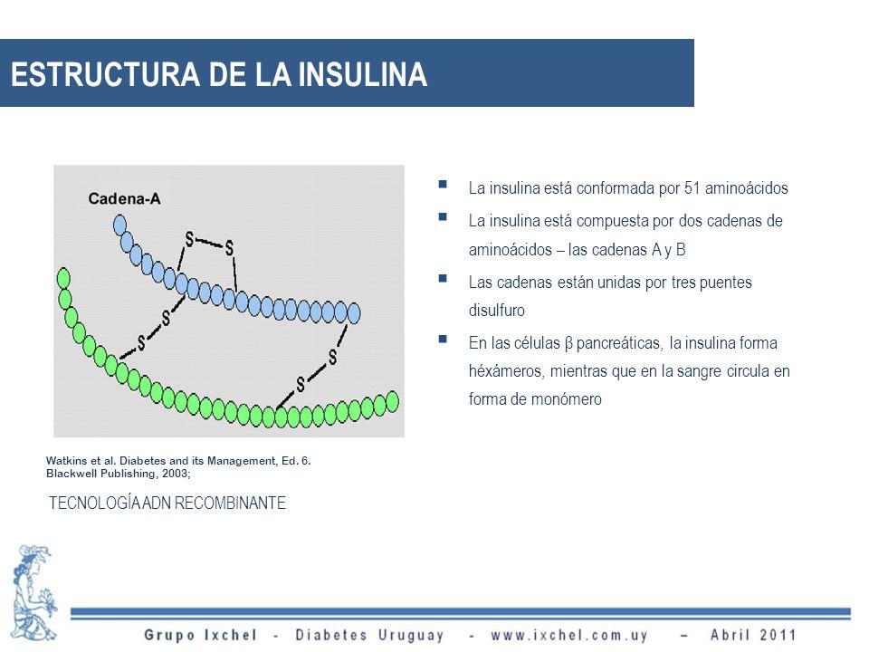 ESTRUCTURA DE LA INSULINA La insulina está conformada por 51 aminoácidos La insulina está compuesta por dos cadenas de aminoácidos – las cadenas A y B Las cadenas están unidas por tres puentes disulfuro En las células β pancreáticas, la insulina forma héxámeros, mientras que en la sangre circula en forma de monómero Watkins et al.