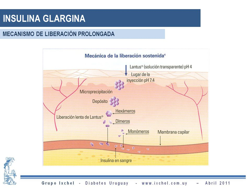 INSULINA GLARGINA MECANISMO DE LIBERACIÓN PROLONGADA