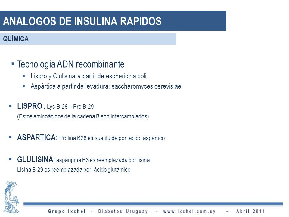 ANALOGOS DE INSULINA RAPIDOS Tecnología ADN recombinante Lispro y Glulisina a partir de escherichia coli Aspártica a partir de levadura: saccharomyces cerevisiae LISPRO : Lys B 28 – Pro B 29 (Estos aminoácidos de la cadena B son intercambiados) ASPARTICA: Prolina B28 es sustituida por ácido aspártico GLULISINA : asparigina B3 es reemplazada por lisina.