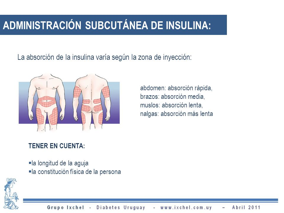 TENER EN CUENTA: la longitud de la aguja la constitución física de la persona abdomen: absorción rápida, brazos: absorción media, muslos: absorción lenta, nalgas: absorción más lenta La absorción de la insulina varía según la zona de inyección: ADMINISTRACIÓN SUBCUTÁNEA DE INSULINA: