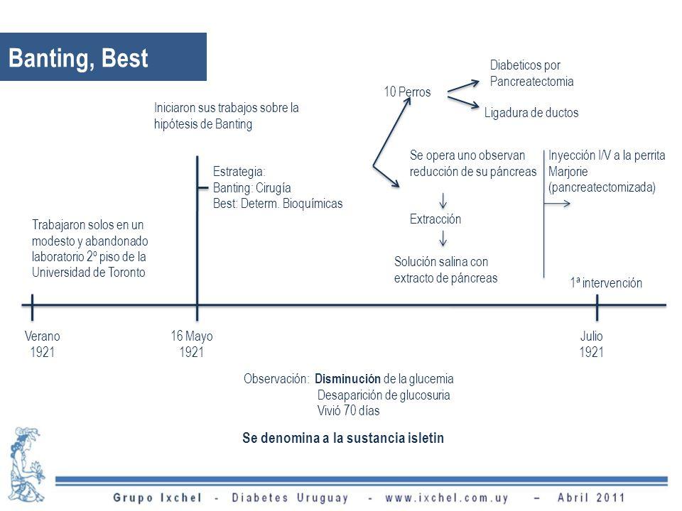Banting, Best Trabajaron solos en un modesto y abandonado laboratorio 2º piso de la Universidad de Toronto Verano 1921 Iniciaron sus trabajos sobre la hipótesis de Banting Estrategia: Banting: Cirugía Best: Determ.