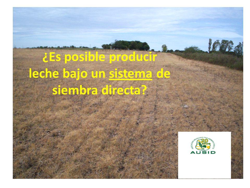 ¿Es posible producir leche bajo un sistema de siembra directa?
