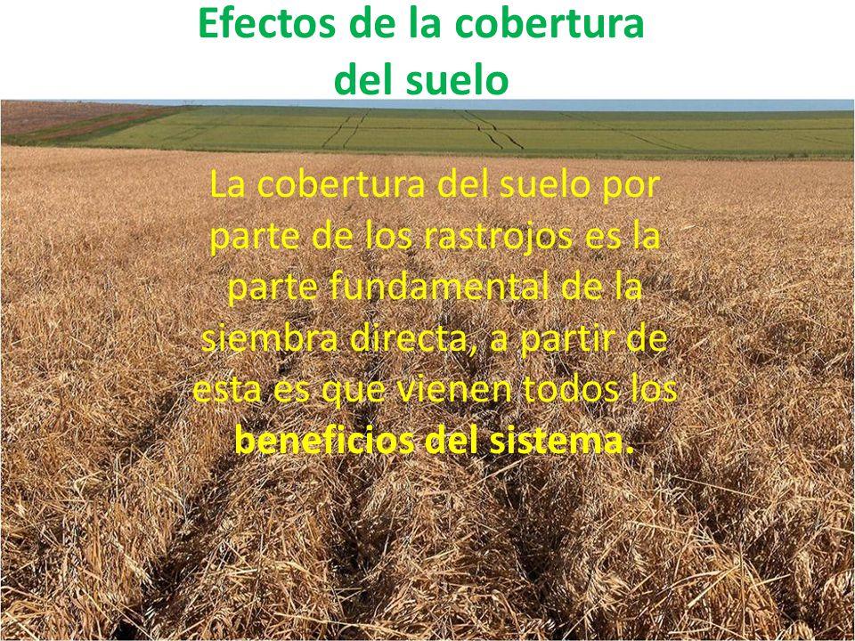 Efectos de la cobertura del suelo La cobertura del suelo por parte de los rastrojos es la parte fundamental de la siembra directa, a partir de esta es