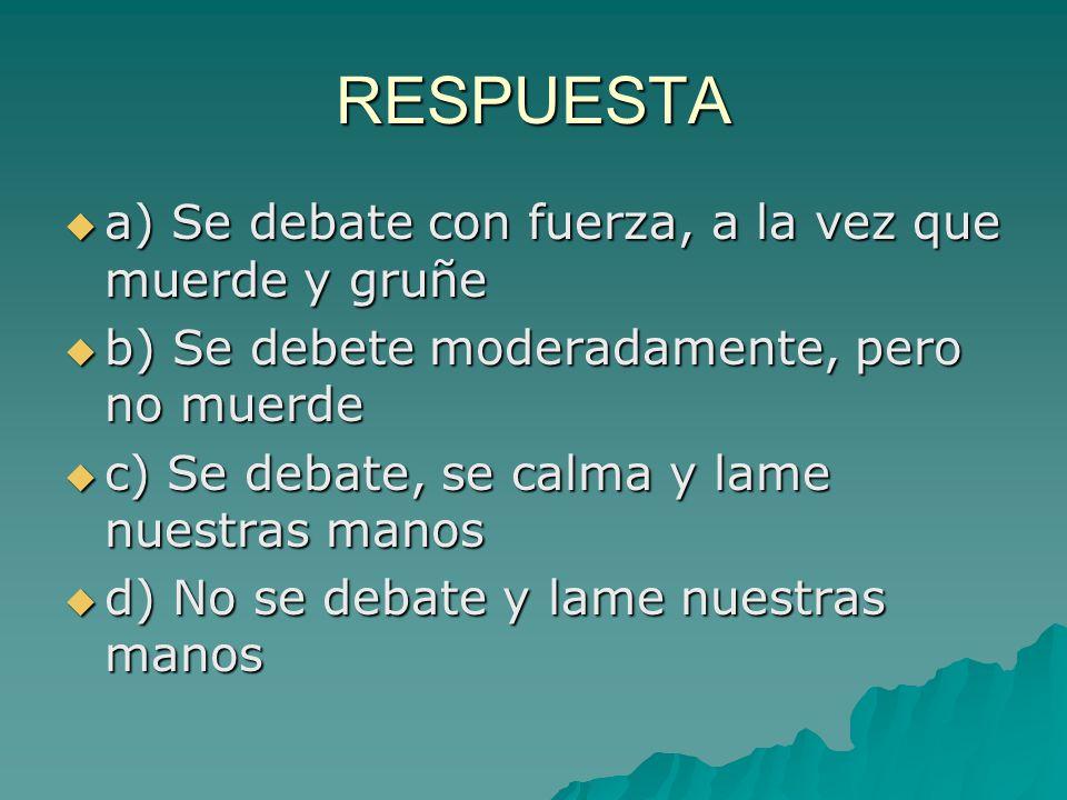 RESPUESTA a) Se debate con fuerza, a la vez que muerde y gruñe a) Se debate con fuerza, a la vez que muerde y gruñe b) Se debete moderadamente, pero n