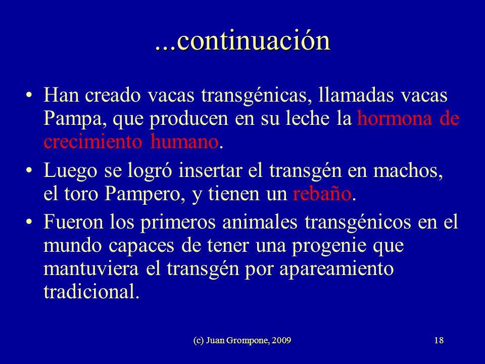 (c) Juan Grompone, 200918...continuación Han creado vacas transgénicas, llamadas vacas Pampa, que producen en su leche la hormona de crecimiento human