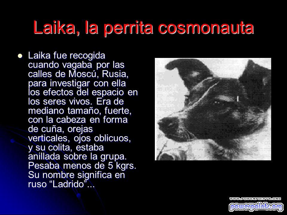 Laika, la perrita cosmonauta Laika fue recogida cuando vagaba por las calles de Moscú, Rusia, para investigar con ella los efectos del espacio en los
